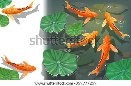 Carps Koi fish under water. Beautiful underwater view with space for text