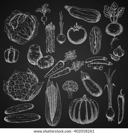 Carrot, cabbage, eggplant, potato, tomato, asparagus, chili, pepper, cucumber and corn, onion, beet, broccoli, pea, garlic, pumpkin, scallion, chinese cabbage, radish, cauliflower vegetables sketches - stock vector