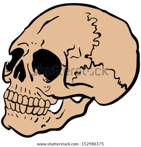 cartoon illustration of another skull