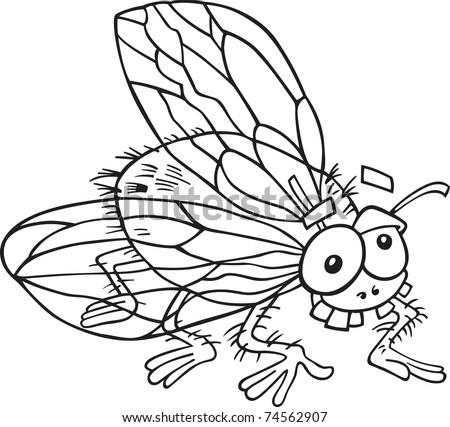 Fly Cartoon Drawing Cartoon Illustration of Fly