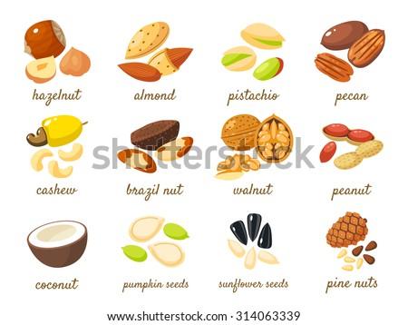 Cartoon nuts set - hazelnut, almond, pistachio, pecan, cashew, brazil nut, walnut, peanut, coconut, pumpkin seeds, sunflower seeds and pine nuts. Vector illustration, eps 10. - stock vector