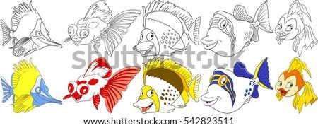 Butterfly Fish Koi Carp Angelfish Triggerfish Goldfish