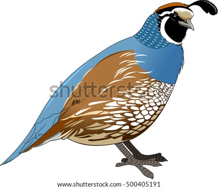 Cartoon quail. Vector illustration with simple gradients