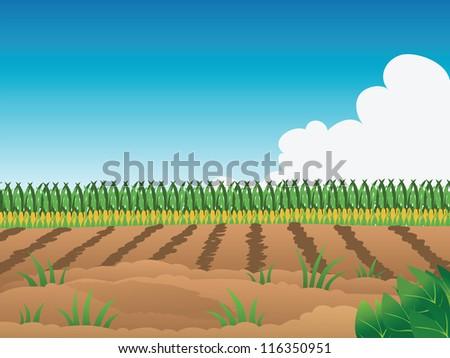 Field Crops Clipart Crop Field Stock Vector