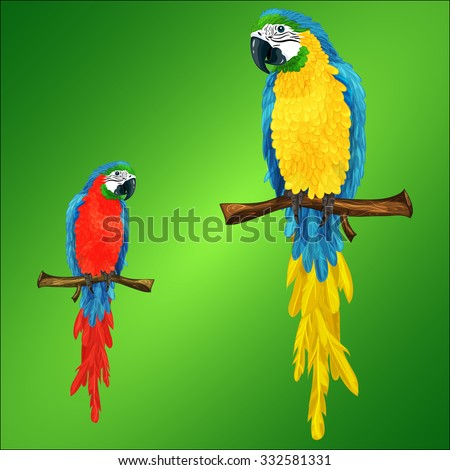 Cartoon vector illustration of two parrots ara macaw - stock vector