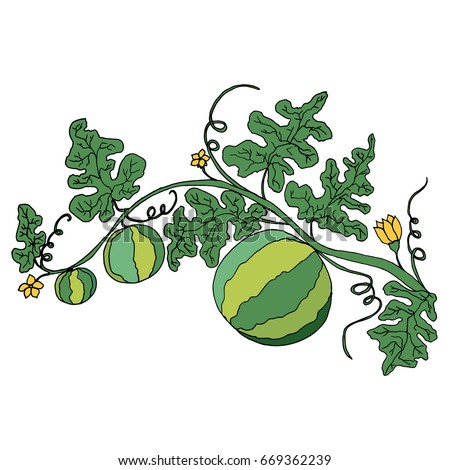 Watermelon Plant Stock Images, Royalty-Free Images ...