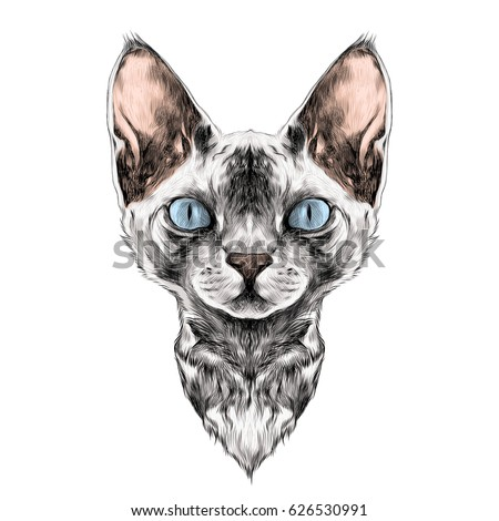Sphynx Stock Images Royalty-Free Images U0026 Vectors | Shutterstock
