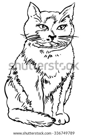 Cat - hand drawn vector illustration, isolated on white