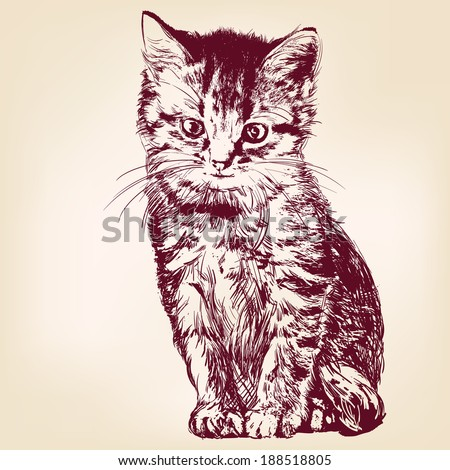 cat  - hand drawn vector llustration isolated - stock vector