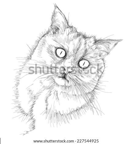 Cat portrait - British chinchilla - black and white vector sketch - stock vector