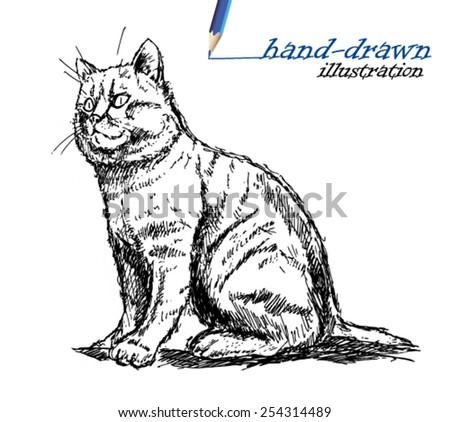 cat sketch illustration  - stock vector