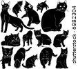 cat vector with details - stock vector