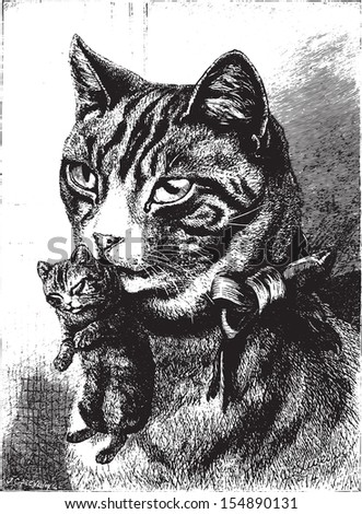 Cat with kitten, vintage engraved illustration. Animaux Sauvages et Domestiques - For kids - 1892. - stock vector
