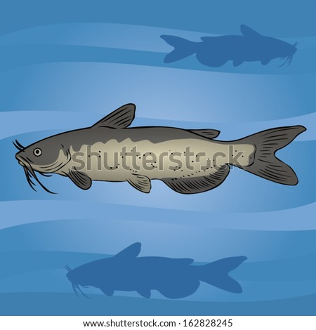 Catfish in the water. - stock vector