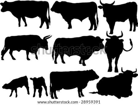 cattle collection silhouettes - stock vector