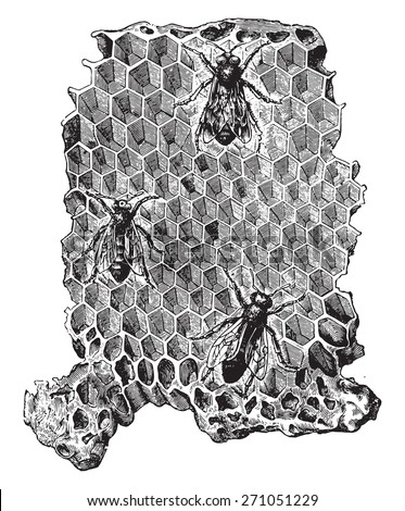 Cells of a beehive, vintage engraved illustration. La Vie dans la nature, 1890.  - stock vector