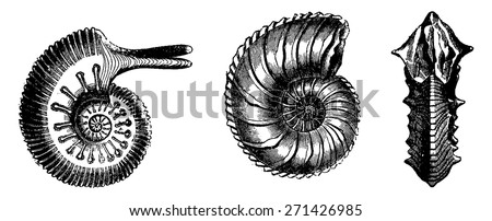 Cephalopods from the Jurassic period, vintage engraved illustration. Earth before man 1886. - stock vector