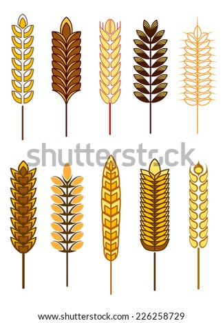 Cereal icons with different designs of golden ears of wheat, barley and rye, vector illustration isolated on white - stock vector