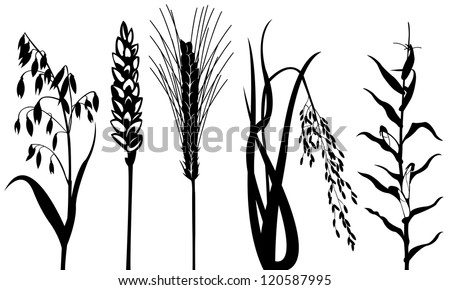 cereal set isolated on white - stock vector