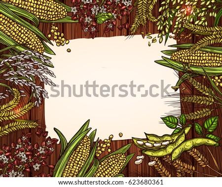 Cereals Grain Blank Page Recipe Note Stock Vector 623680361 ...