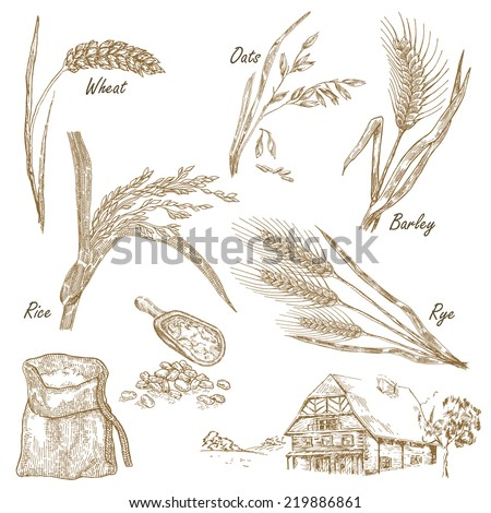 Cereals set. Hand drawn illustration wheat, rye, oats, barley, farm house in vintage style