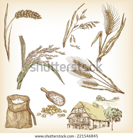 Cereals set. Hand drawn illustration wheat, rye, oats, barley, rice, farm house in vintage style - stock vector