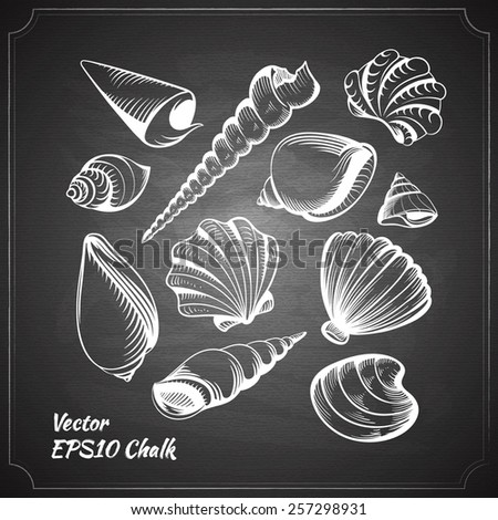 chalk painted seashells set on the black chalkboard vector illustration - stock vector