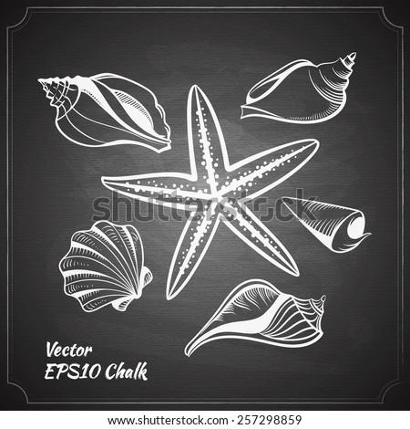chalk painted starfish and seashells set on the black chalkboard vector illustration - stock vector