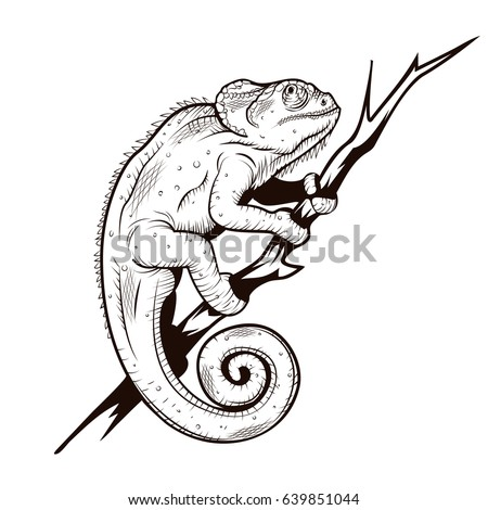 Chameleon On A Branch Illustration Coloring Page