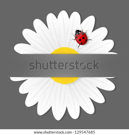 Chamomile flower and ladybird isolated on grey background. Vector illustration. - stock vector