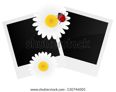 Chamomile flower and photo frame isolated on white background. Vector illustration. - stock vector