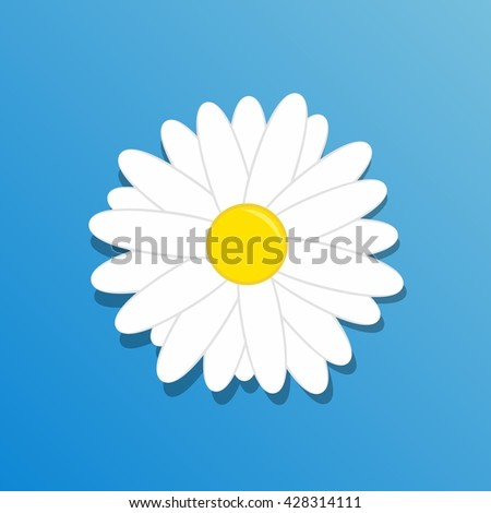 Chamomile flower. Beautiful white daisy flower isolated on blue background. - stock vector