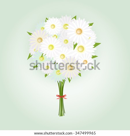 Chamomile Flower or White Daisy Daisy Bouquet  - stock vector