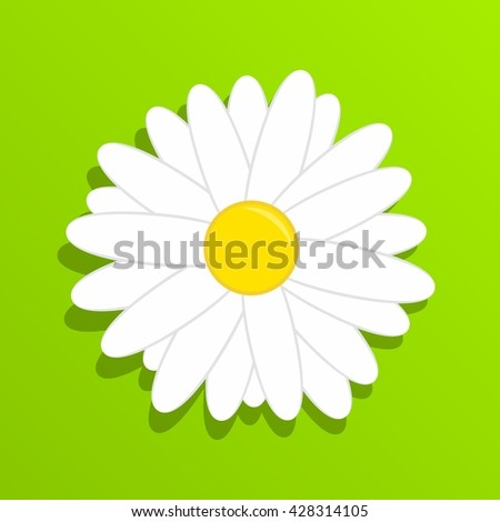 Chamomile on grass. Beautiful white daisy flower isolated on green background. - stock vector