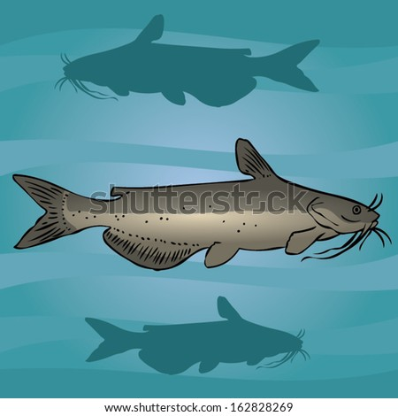 Channel catfish in the water. The object of hunting fisherman. - stock vector