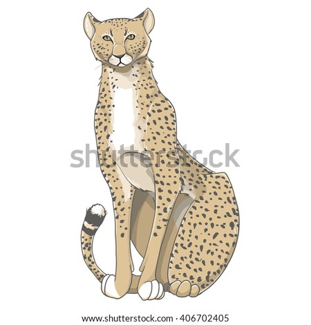 Cheetah / Cheetah line / drawing Cheetah / Cheetah vector