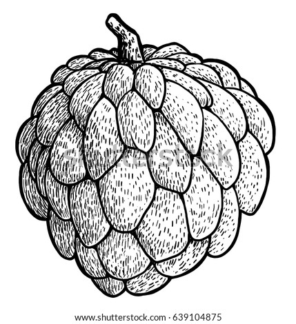 Custard Apple Stock Images, Royalty-Free Images & Vectors ...