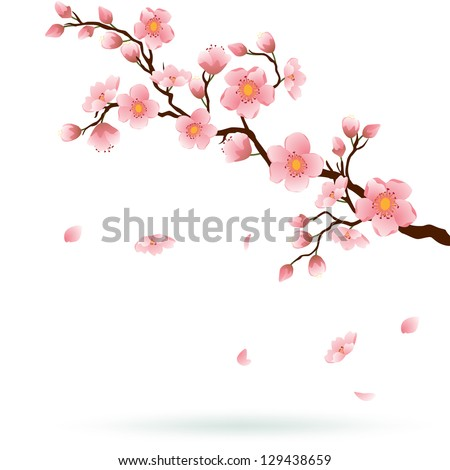 Cherry blossom branch with falling petals isolated on white. Space for your text. Vector - stock vector