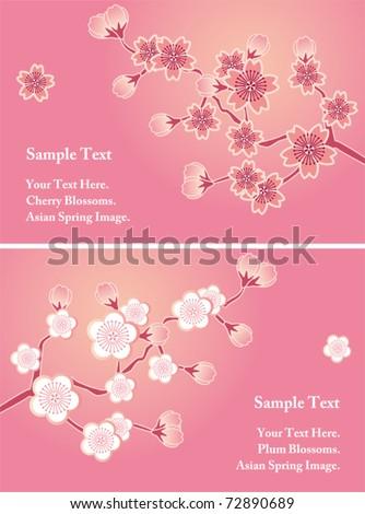 Cherry blossom cards set. Illustration vector. - stock vector