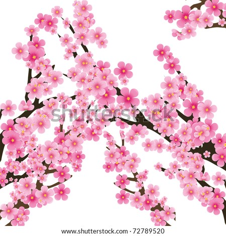 Cherry blossom, flowers of sakura, tree brunch, spring background,vector illustration - stock vector