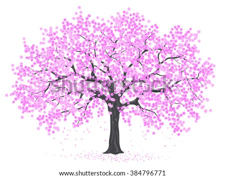 Cherry Blossom Tree  on White Background - stock vector
