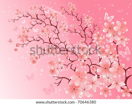 cherry blossom,  vector illustration