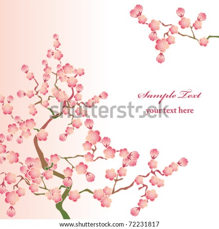Cherry blossoms. Illustration vector. - stock vector