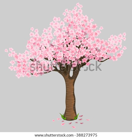 Cherry blossoms isolated on a gray background. Vector illustration.