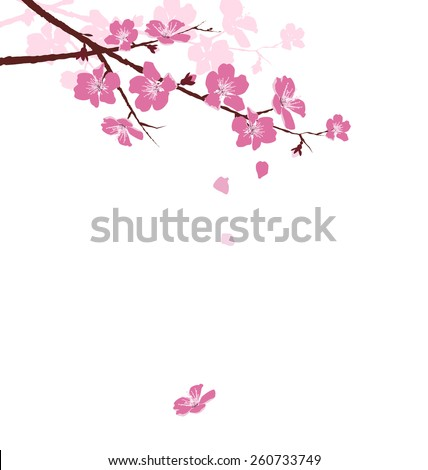 Cherry branch with flowers isolated on white background - stock vector