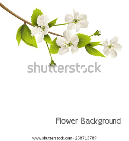 Cherry branch with white flowers isolated on white background - stock vector
