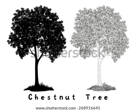 Chestnut tree Black Silhouette, Contours and Inscriptions Isolated on White Background. Vector - stock vector