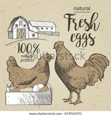 Chicken, hen, rooster, cock, cockerel, eggs and farm. Vector illustration in vintage style. - stock vector
