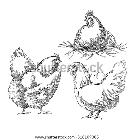 Chiken sketch. Vector illustration isolated on white background. - stock vector