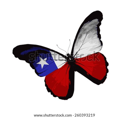 Chilean flag butterfly, isolated on white - stock vector